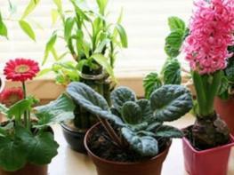 Սենյակային ծաղիկները ջրելիս պատրաստեք ԱՅՍ խառնուրդը, և ձեր ծաղիկները կլինեն ավելի առողջ ու կաճեն շատ արագ