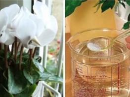 Ֆլորիստները երաշխավորում են!!! Այս միջոցից հետո ձեր սենյակային ծաղիկները խելահեղ կերպով կսկսեն աճել