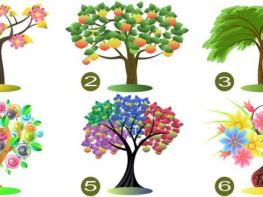 Մարդու բնավորության առեղծվածը հասկանալու բանալիներից մեկը նրա կողմից կատարվող ընտրությունն է. ընտրեք ծառն ու իմացեք ձեր հոգեբանական դիմանկարը