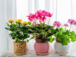 Ես լցրեցի այս միջոցը իմ տան ծաղիկների վրա և նրանք սկսեցին աճել ավելի արագ և առողջ․ Սա փորձել է պետք