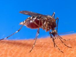 Ազգությամբ հնդիկը Հայաստան է եկել մալարիայիով վարակված